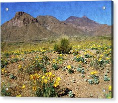 Spring Bloom Franklin Mountains Acrylic Print by Kurt Van Wagner
