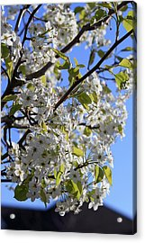 Acrylic Print featuring the photograph Spring Blooms by Kay Novy