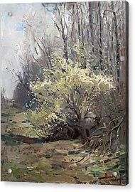Spring Blossom  Acrylic Print by Ylli Haruni
