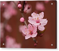 Spring Blossoms Acrylic Print by Bob Smithing