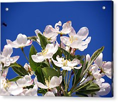 Acrylic Print featuring the photograph Spring Blossoms by Darleen Stry