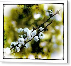 Acrylic Print featuring the photograph Spring Bough by Judi Bagwell