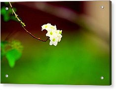 Spring Bud Acrylic Print by Bret Worrell