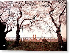 Spring Cherry Blossoms - Central Park Reservoir Acrylic Print by Vivienne Gucwa