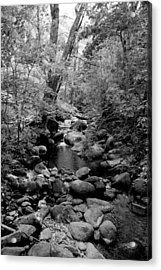 Acrylic Print featuring the photograph Spring Creek by Kathleen Grace