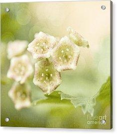 Spring Currant Blossom Acrylic Print