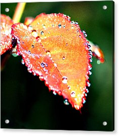 Spring Dew Acrylic Print by Michelle Joseph-Long