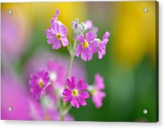 Spring Flower Acrylic Print by Myu-myu