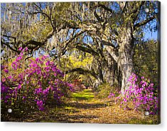 Spring Flowers Charleston Sc Azalea Blooms Deep South Landscape Photography Acrylic Print by Dave Allen