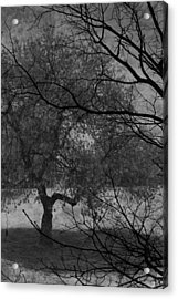 Spring For Leaves  Acrylic Print by Jerry Cordeiro