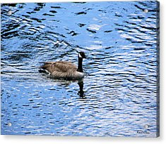 Acrylic Print featuring the photograph Spring Goose by Wendy McKennon