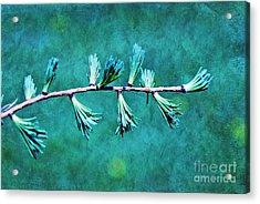 Spring Has Sprung Acrylic Print by Aimelle
