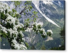 Spring In Alps Acrylic Print by Sola Deo Gloria