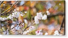 Spring In Autumn Acrylic Print by Eena Bo