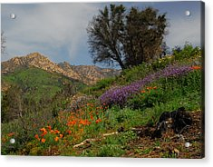 Acrylic Print featuring the photograph Spring In Santa Barbara by Lynn Bauer