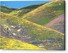 Spring In The Gorman Hills Acrylic Print