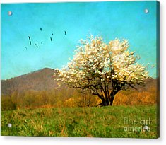 Spring In The Mountains Acrylic Print by Darren Fisher