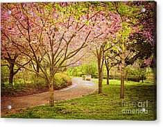 Acrylic Print featuring the photograph Spring In The Park by Cheryl Davis