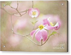 Spring Inspiration Acrylic Print by Cheryl Davis