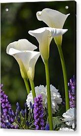 Spring Lillies Acrylic Print by Dickon Thompson