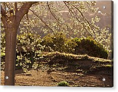 Spring Morning Light Acrylic Print
