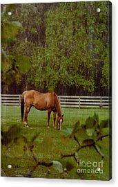Spring Pasture 2 Acrylic Print
