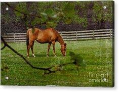 Spring Pasture Acrylic Print