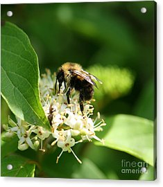 Spring Pollination Acrylic Print by Neal Eslinger