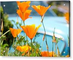 Spring Poppies Acrylic Print