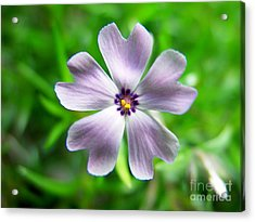 Acrylic Print featuring the photograph Spring Purple by Thanh Tran