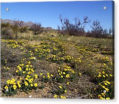 Spring Surprise Franklin Mountains Acrylic Print by Kurt Van Wagner
