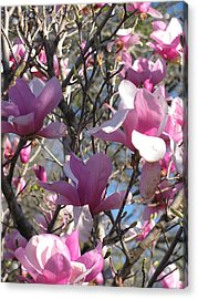 Spring Time Revisited Acrylic Print by Shawn Hughes