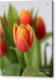 Spring Tulips Acrylic Print by Ursula Lawrence
