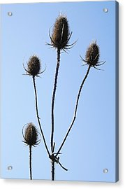 Acrylic Print featuring the photograph Spring Weeds 1 by Gerald Strine