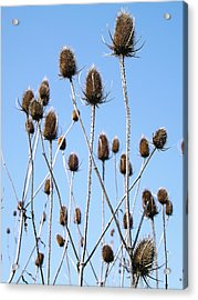 Acrylic Print featuring the photograph Spring Weeds 2 by Gerald Strine