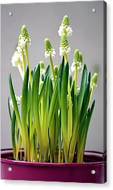 Spring White Flowers Acrylic Print by © Fanny BETEMPS - 2010