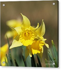 Acrylic Print featuring the photograph Springing Spring by Julie Clements