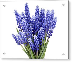 Acrylic Print featuring the photograph Springs Flowers  by Aleksandr Volkov