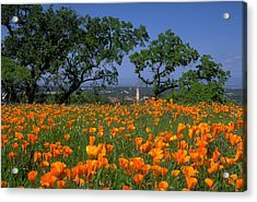 Springtime At Stanford Acrylic Print