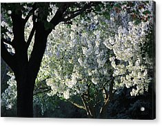 Springtime In Wisconsin Acrylic Print by James Hammen