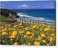 Springtime On The Headlands Acrylic Print by Cliff Wassmann