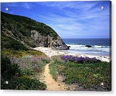 Springtime Trail  Dana Point Headlands Acrylic Print