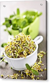 Sprouts In Cups Acrylic Print