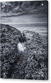 Squeezing Through Every Crack Acrylic Print by Mike  Dawson