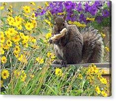 Squirrel   Acrylic Print by Amalia Jonas