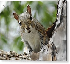 Squirrel 2 Acrylic Print