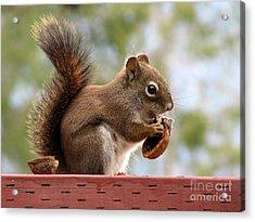 Squirrel And His Walnut Acrylic Print by Leone Lund