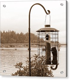 Squirrel In A Squirrel-proof Bird Feeder Acrylic Print by Tanya  Searcy