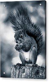 Squirrel In Monochrome Acrylic Print