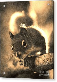 Squirrel In Sepia Acrylic Print by Janeen Wassink Searles